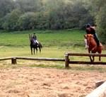 img_horse3